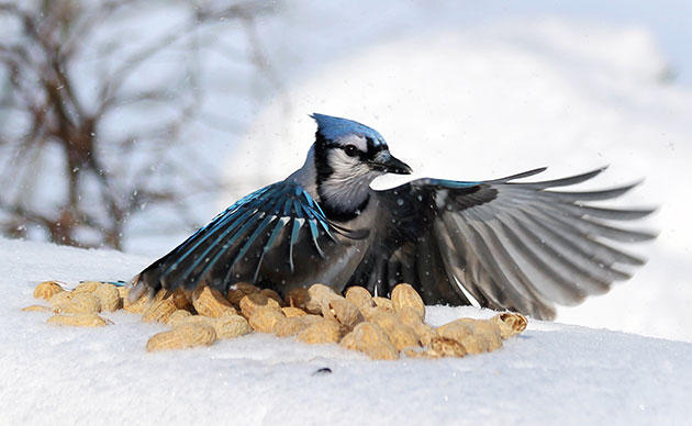 Science Fun for a Good Cause! The Great Backyard Bird Count